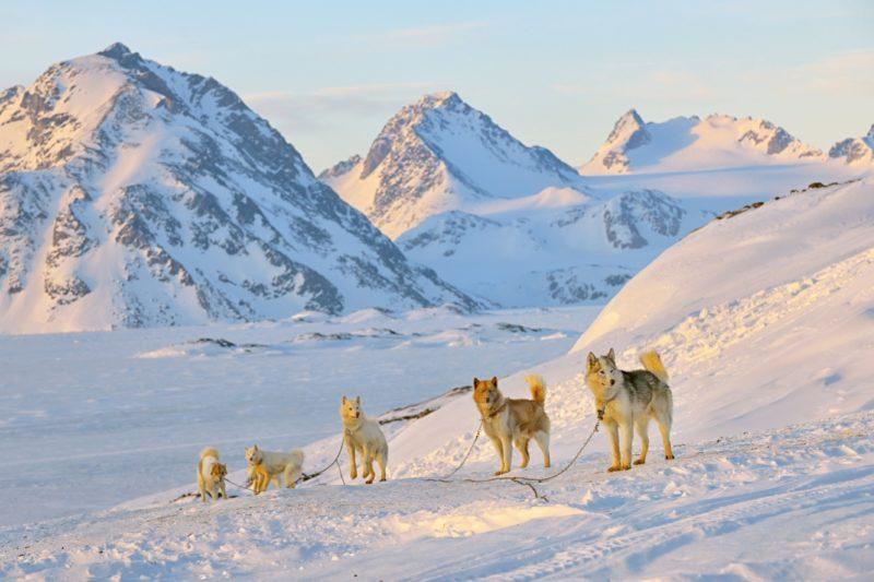 冬のグリーンランドの犬ぞり風景