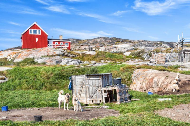 グリーンランド西岸のオカートスト グリーンランド・ハスキー