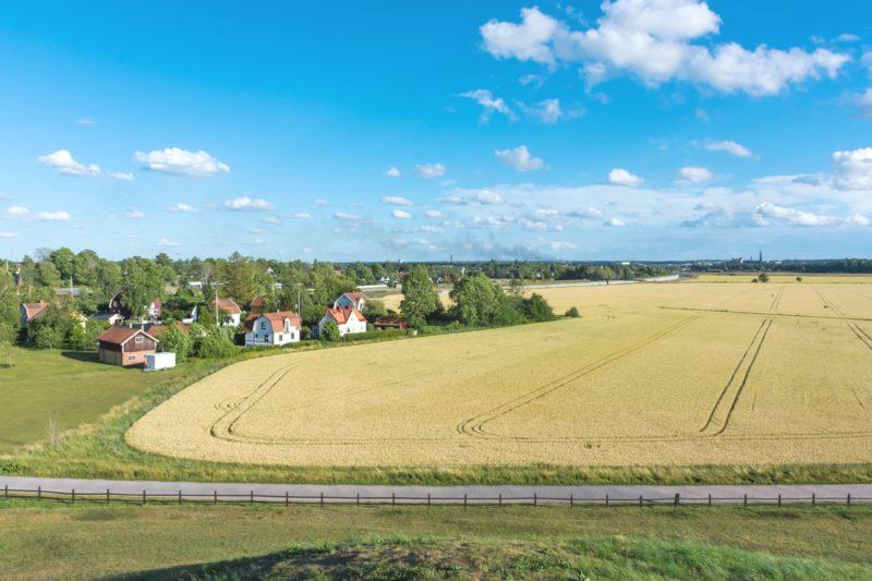 ウプサラ近くの小麦畑