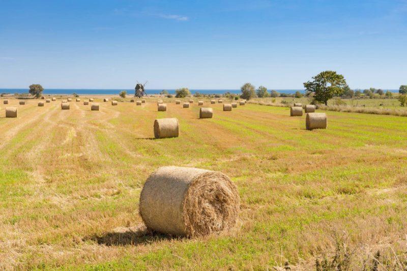 エーランド島の風景